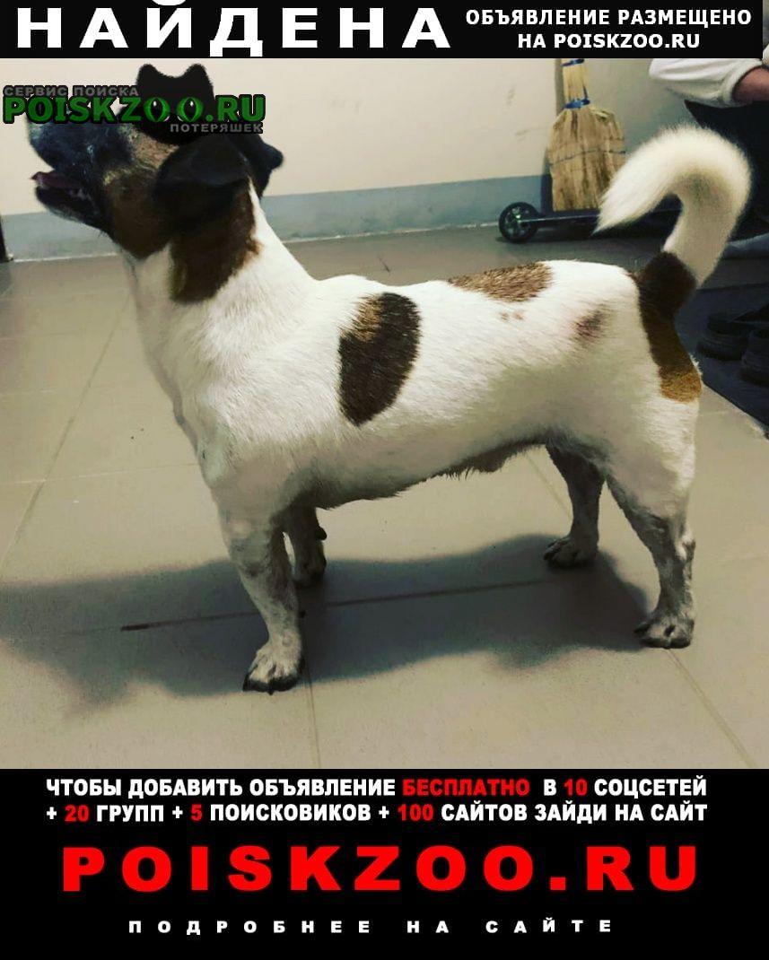 Найдена собака кобель Кострома