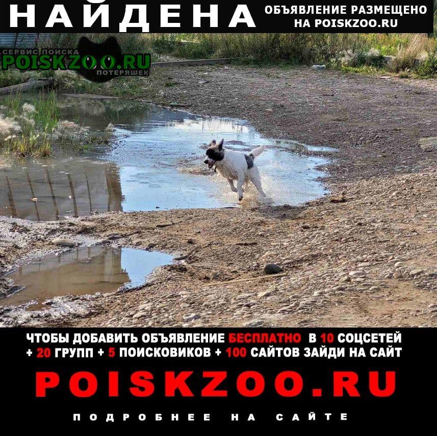 Найдена собака среднего роста молодая сука Иркутск