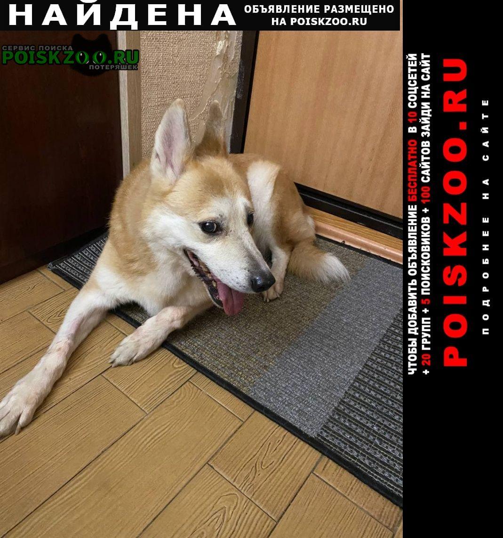 Найдена собака кобель в районе улицы делегатской в москве Москва