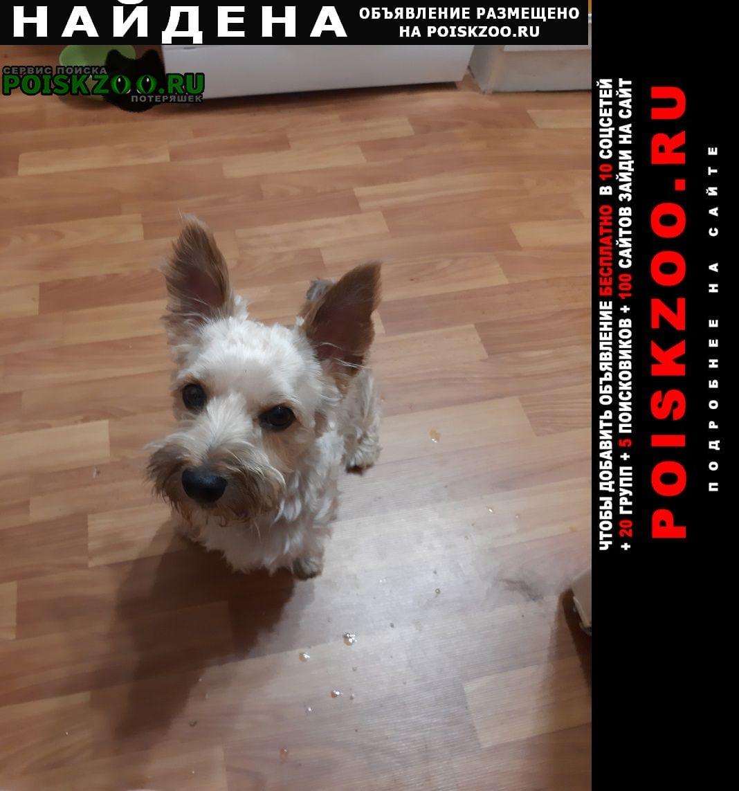 Найдена собака кобель сегодня в 20:00 Санкт-Петербург