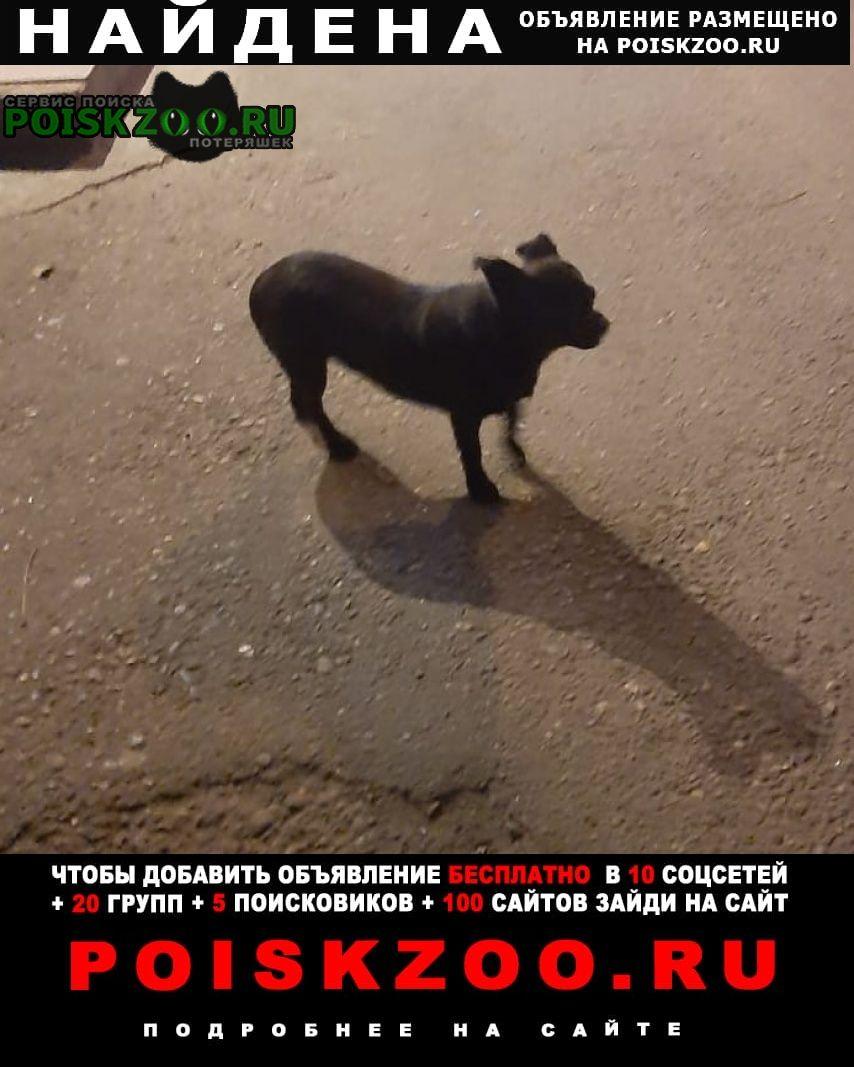 Найдена собака небольшая черненькая бегает ищет кого-то Краснодар