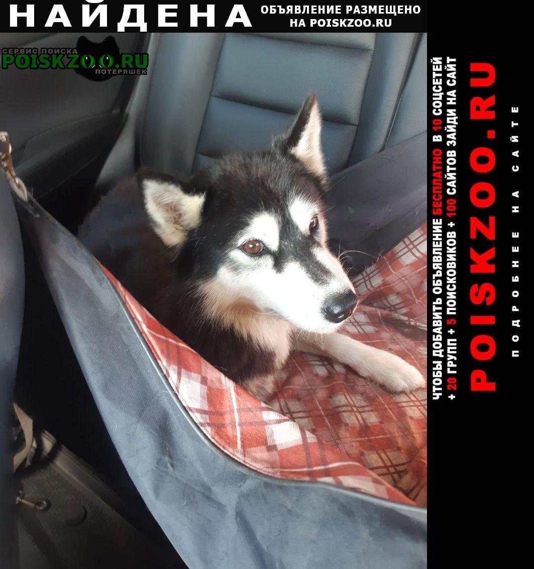 Найдена собака девочка, молодая, здоровая. Кашин