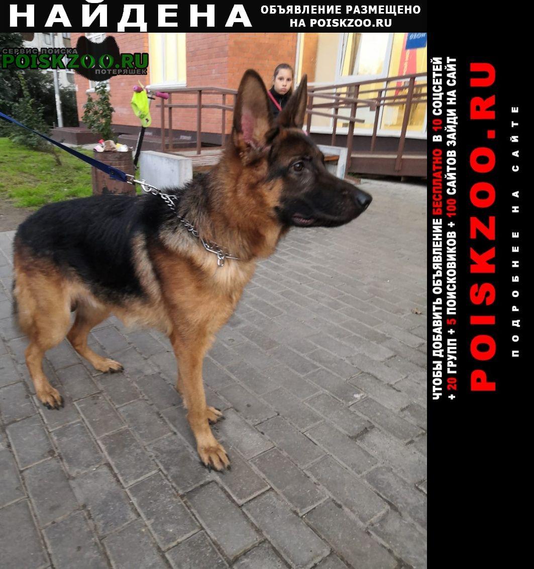 Найдена собака кобель немецкой овчарки Лобня