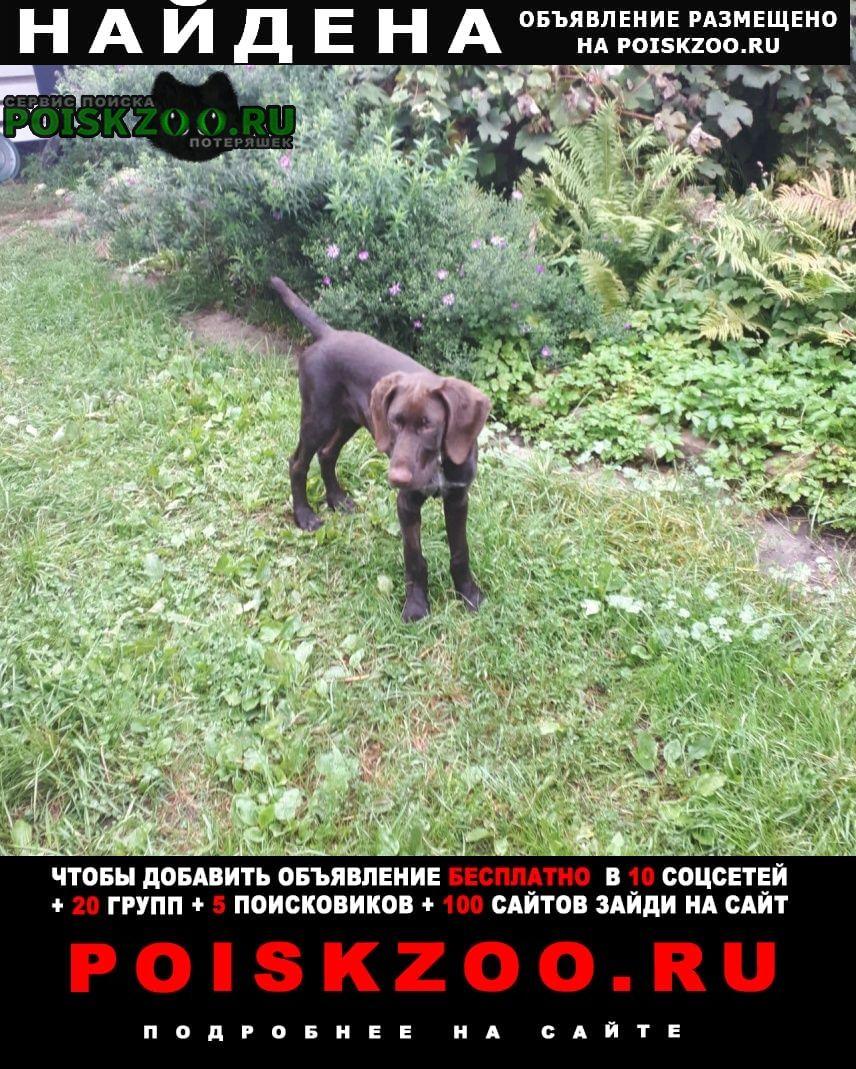 Найдена собака кобель щенок Смолевичи