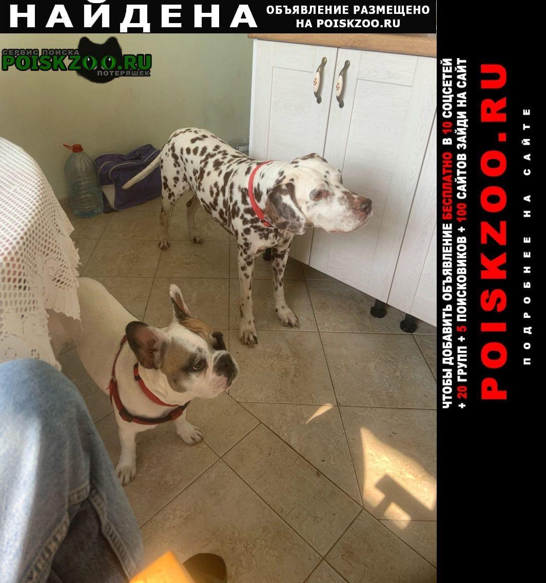 Найдена собака далматинец Москва