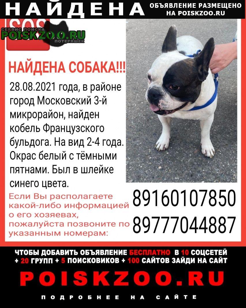 Найдена собака кобель французский бульдог Московский