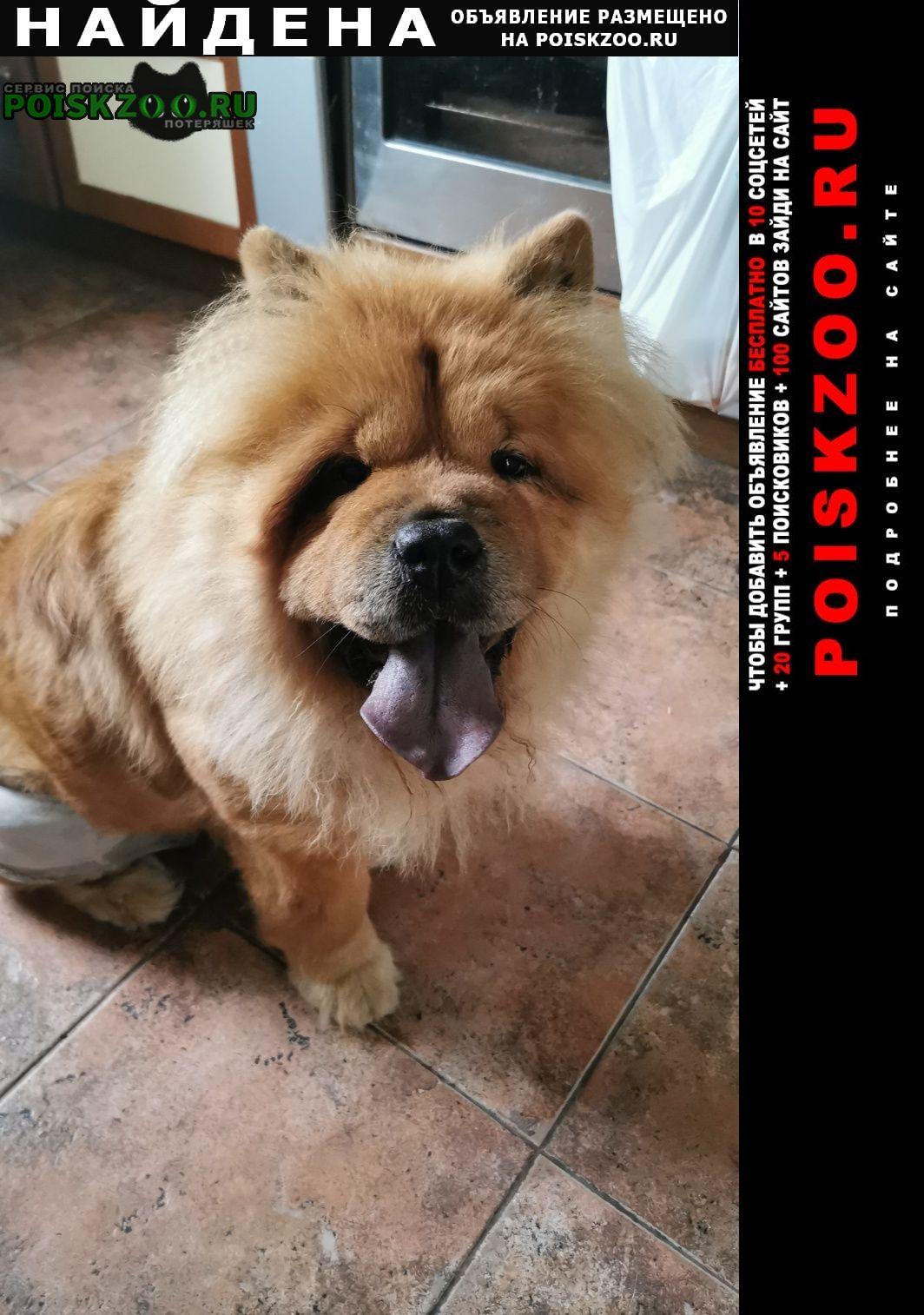 Найдена собака чау-чау Москва