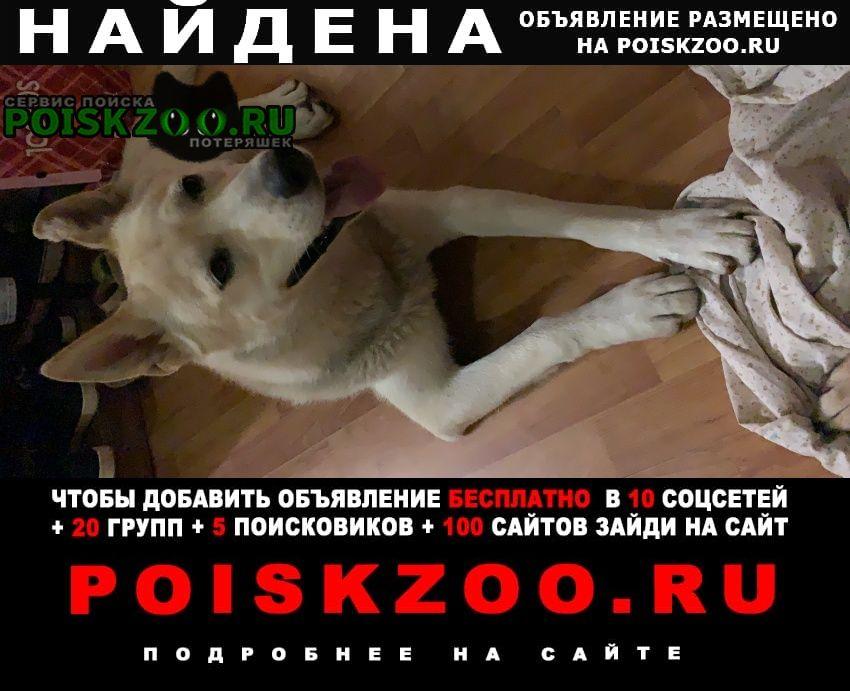 Найдена собака кобель метис хаски. палевый Москва