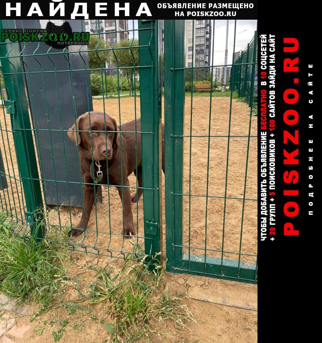 Найдена собака девочка-лабрадор, жк испанские кварталы Москва
