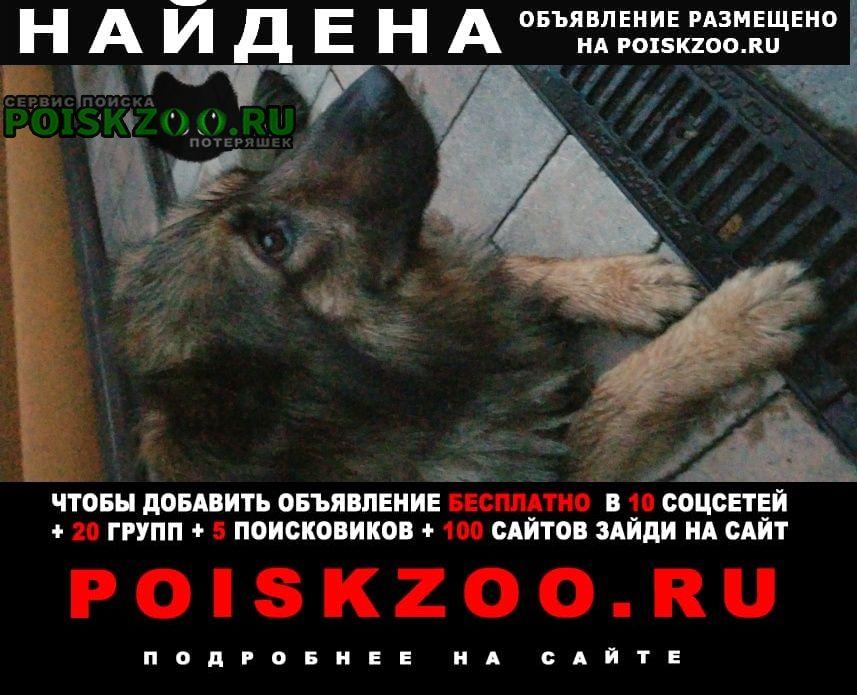 Найдена собака мальчик Москва