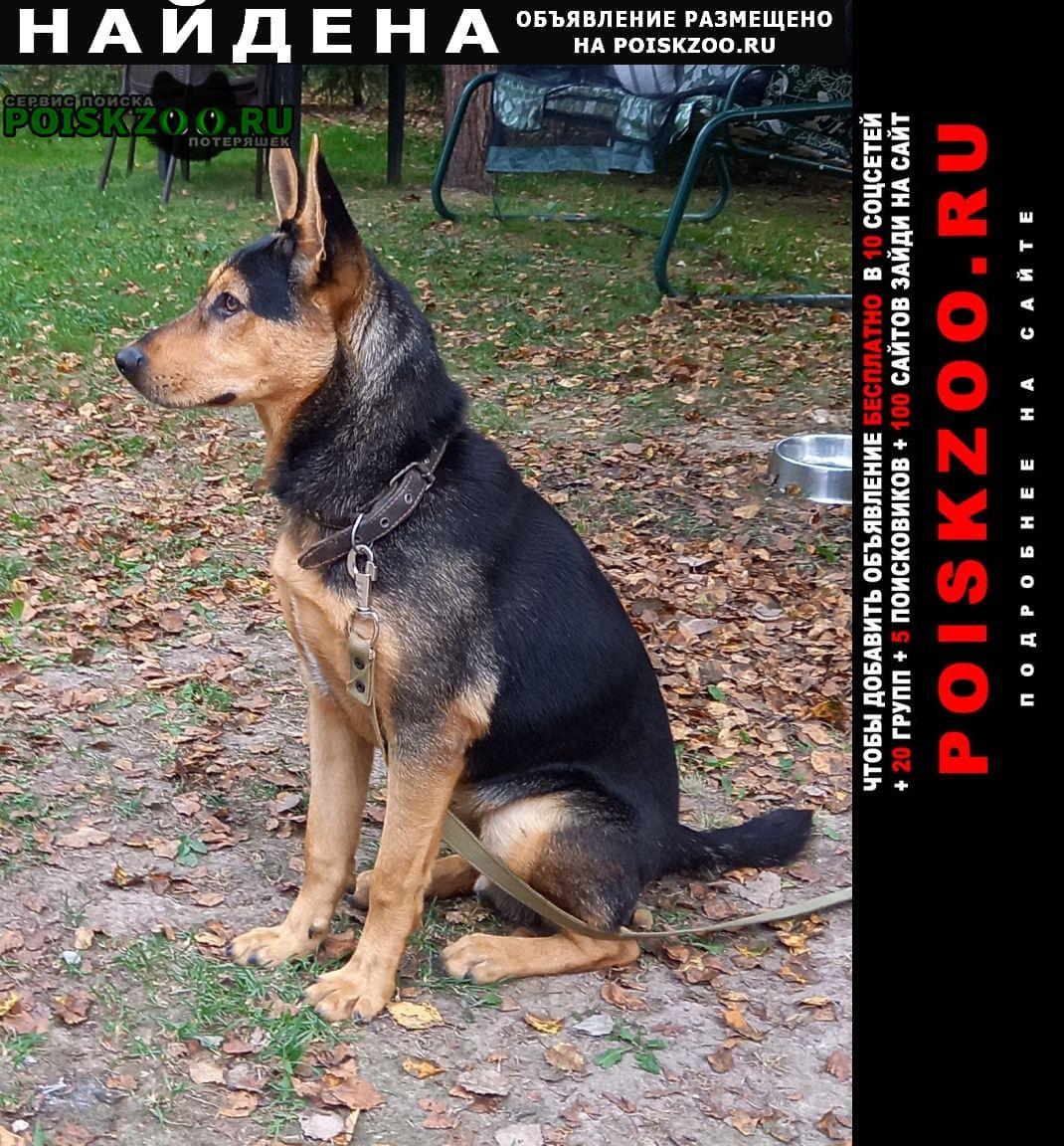 Найдена собака кобель калужская область Балабаново