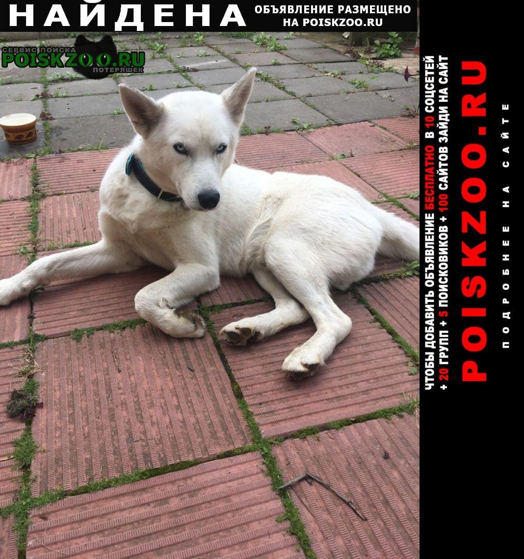 Найдена собака в деревне лапшинка Москва