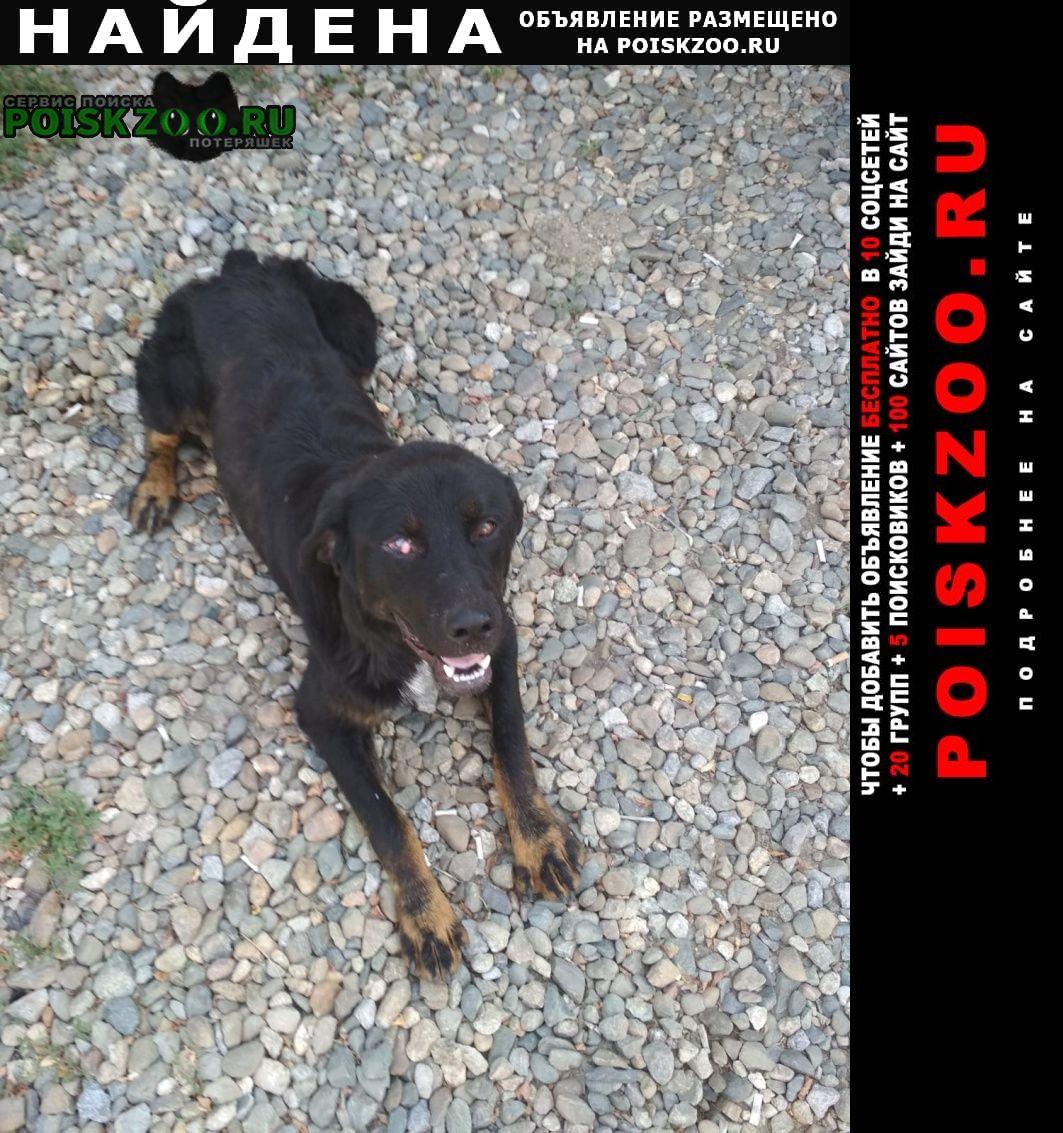 Найдена собака кобель найдет ротвейлер Краснодар
