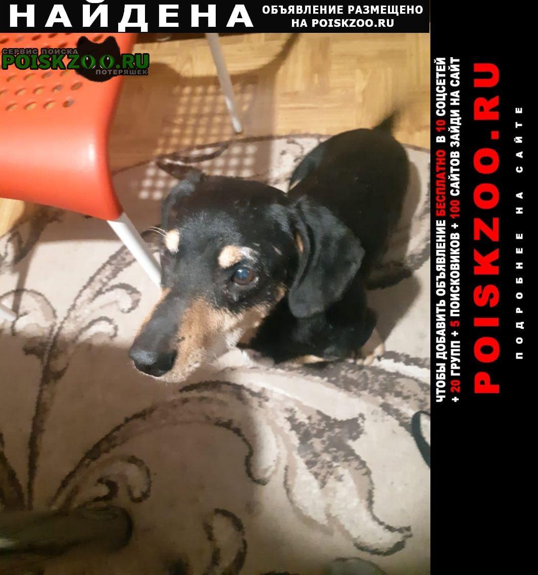 Найдена собака кобель Барнаул