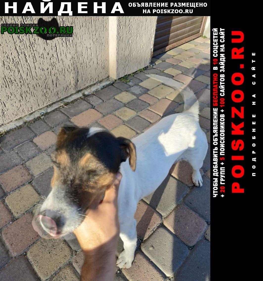 Найдена собака девочка Краснодар