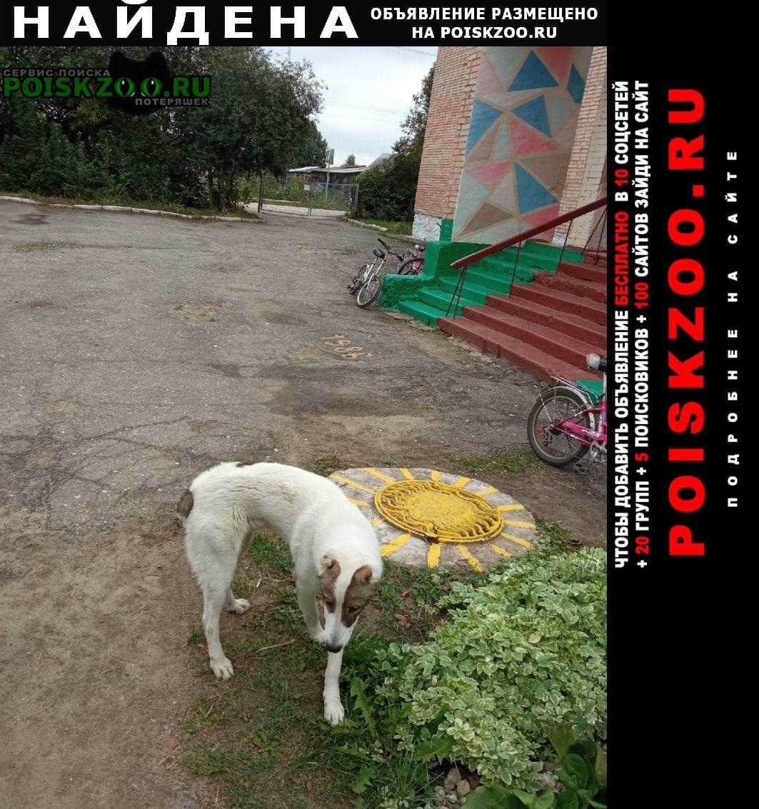 Найдена собака кобель в с. мушковатово. Рязань