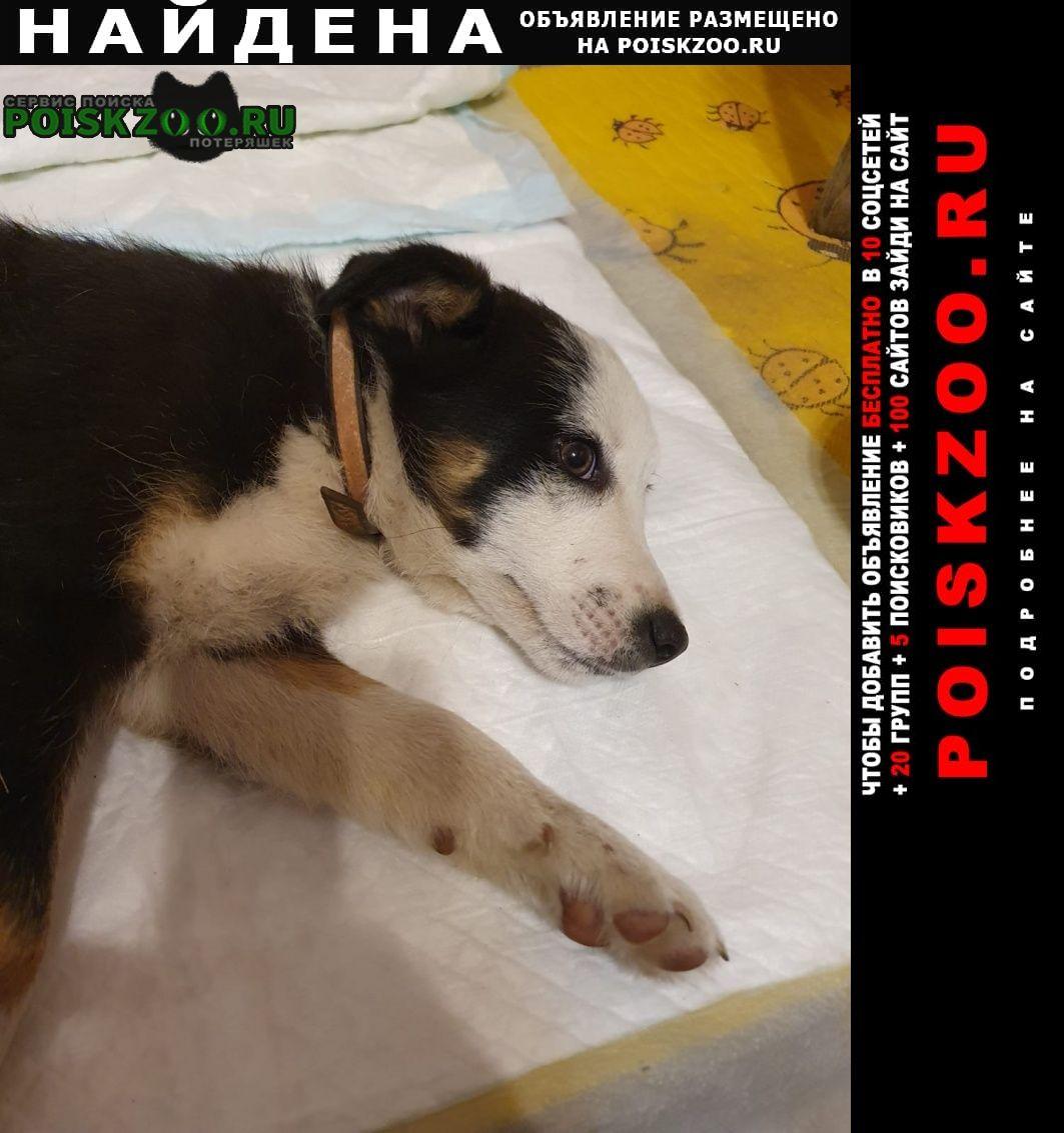 Найдена собака кобель в парке олимпик, на шее ошейник Воронеж