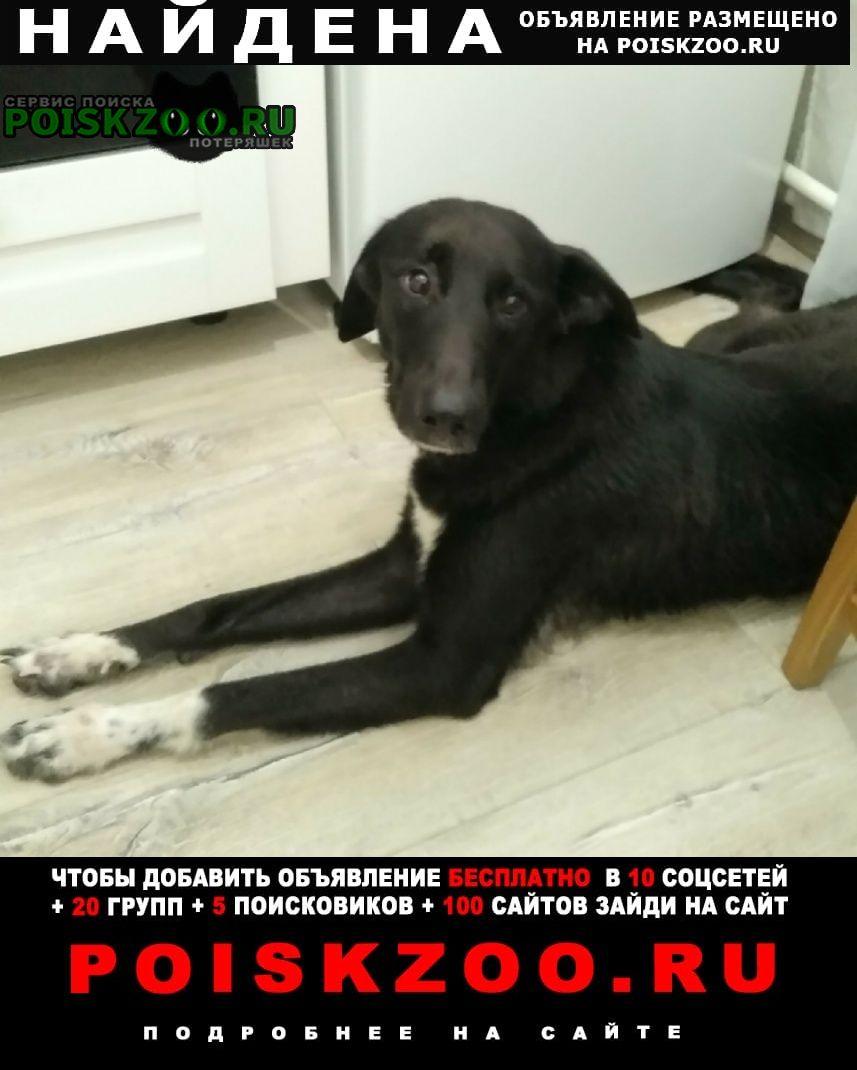 Найдена собака чёрная сука с белыми пятнышками на лапах Москва