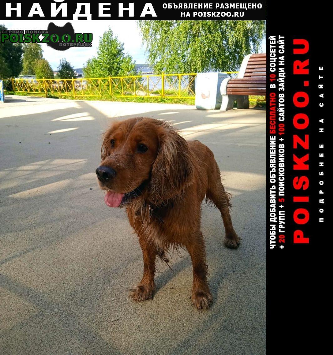 Найдена собака кобель Петрозаводск