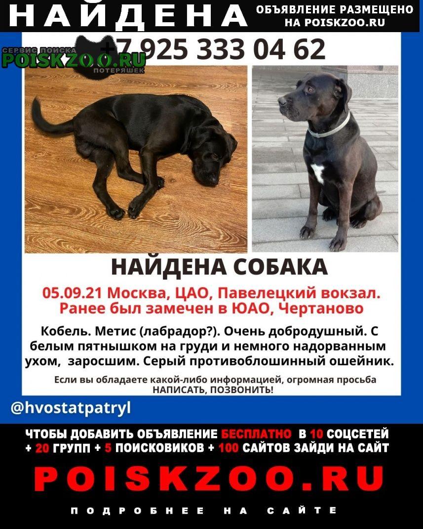 Найдена собака кобель, черного окраса с белым пятнышком Москва