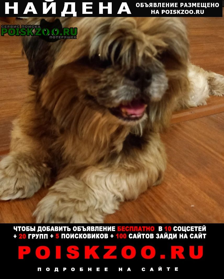 Найдена собака Иркутск