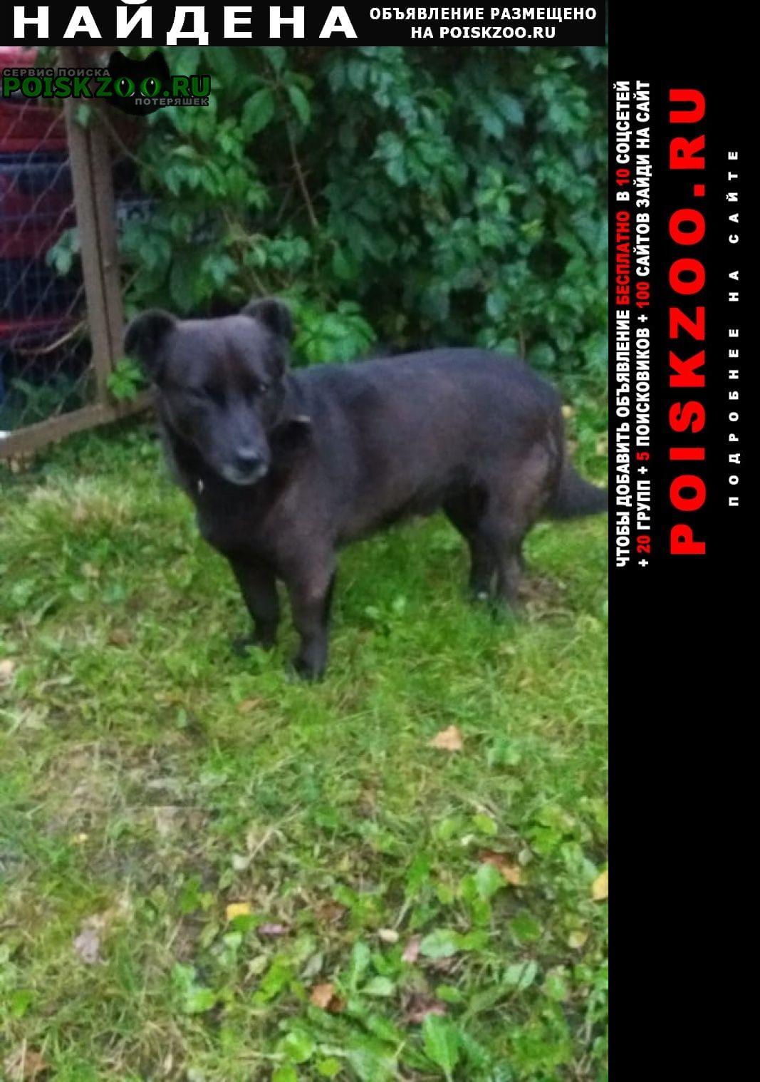 Найдена собака черная маленькая с ошейником Чехов