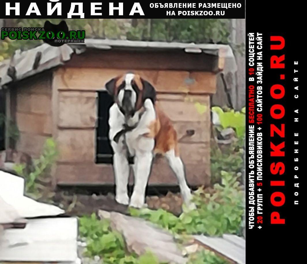 Найдена собака кобель Липецк