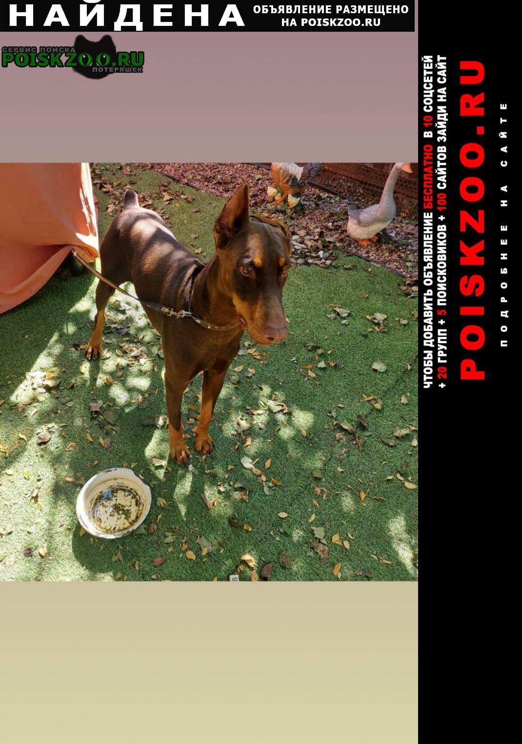 Найдена собака кобель доберман, Краснодар
