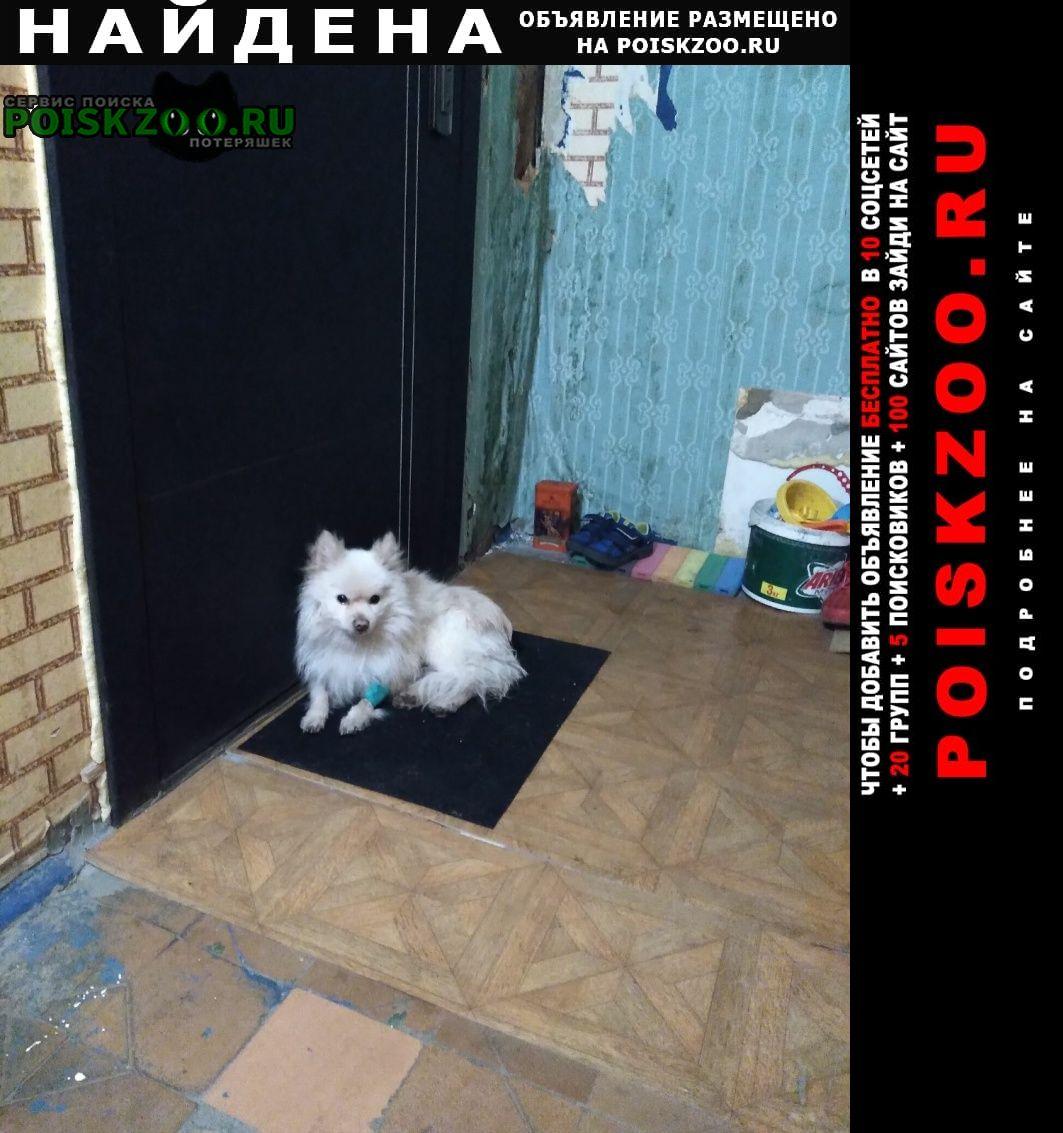 Найдена собака кобель породы шпиц. Пенза