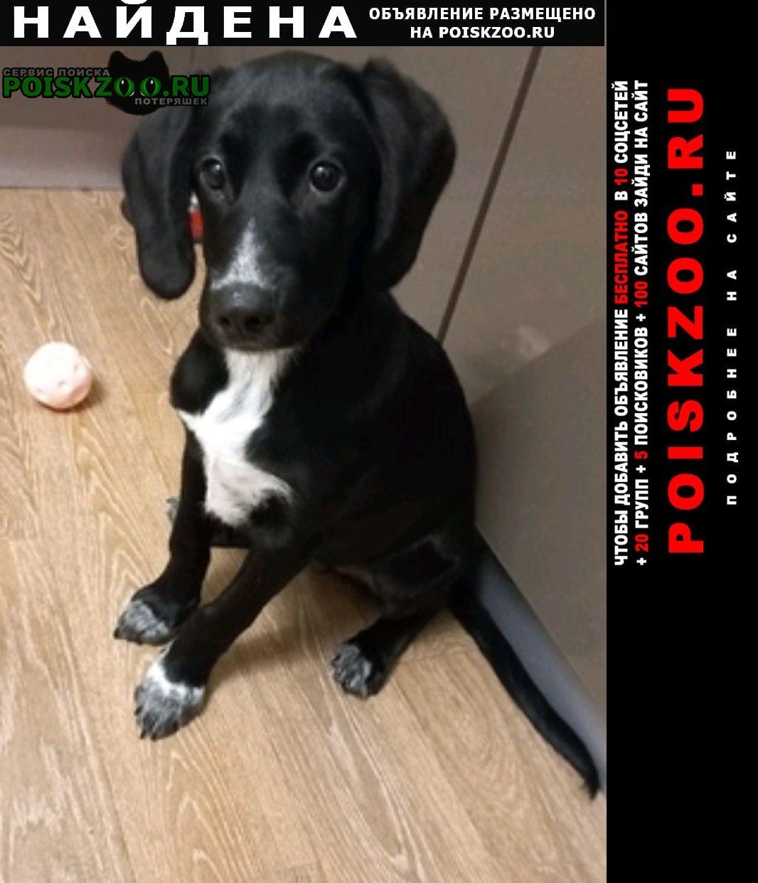 Найдена собака щенок 4-5 месяцев Тюмень