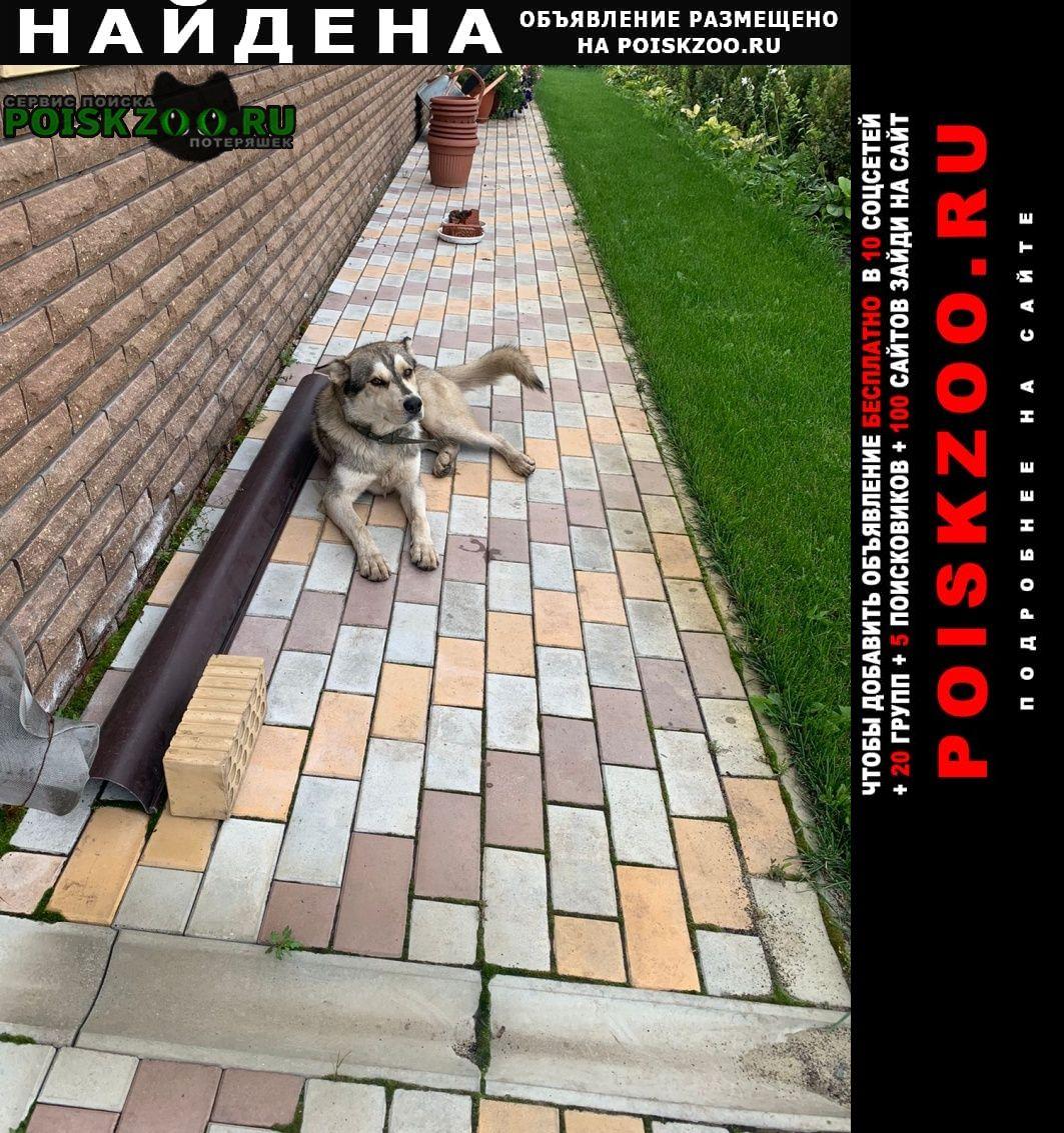 Найдена собака кобель хаски в сапуголи Лаишево
