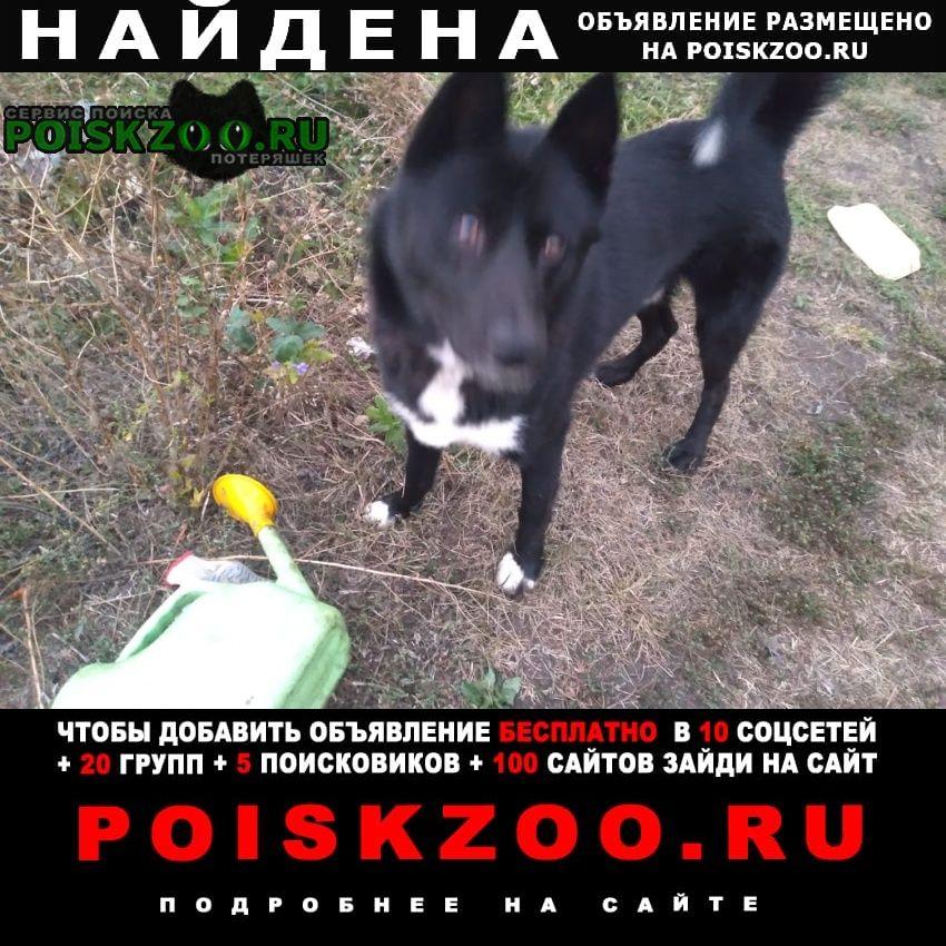 Найдена собака кобель молодой черного цвета с белым Липецк