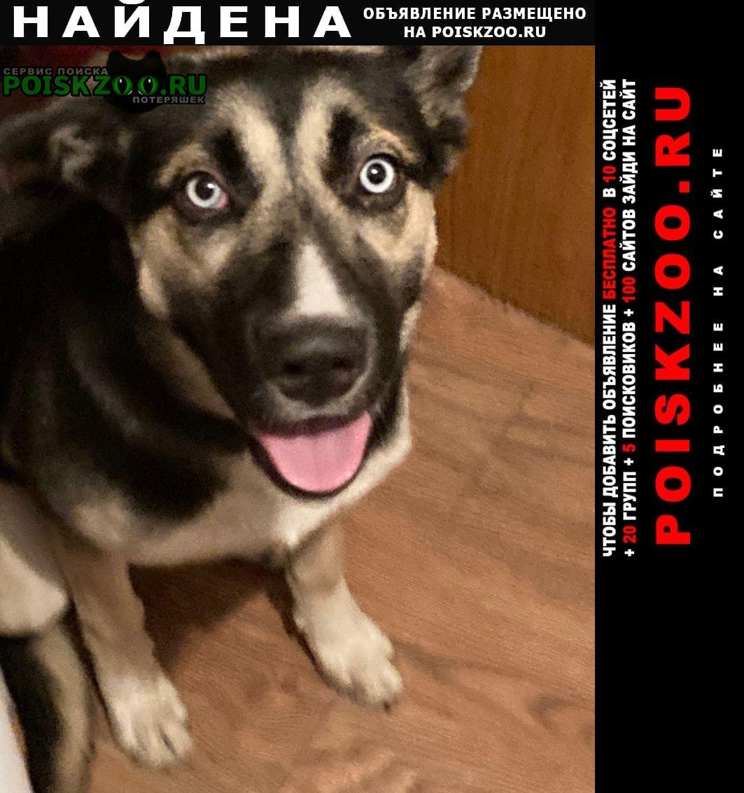 Найдена собака метис (возможно метис хаски) Москва