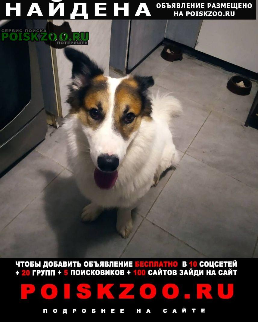 Найдена собака кобель мальчик. Москва
