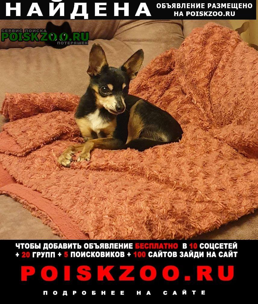 Найдена собака кобель той-терьер, в возрасте Екатеринбург