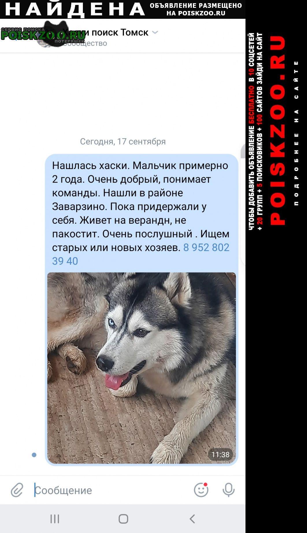 Найдена собака кобель ищем хозяина Томск