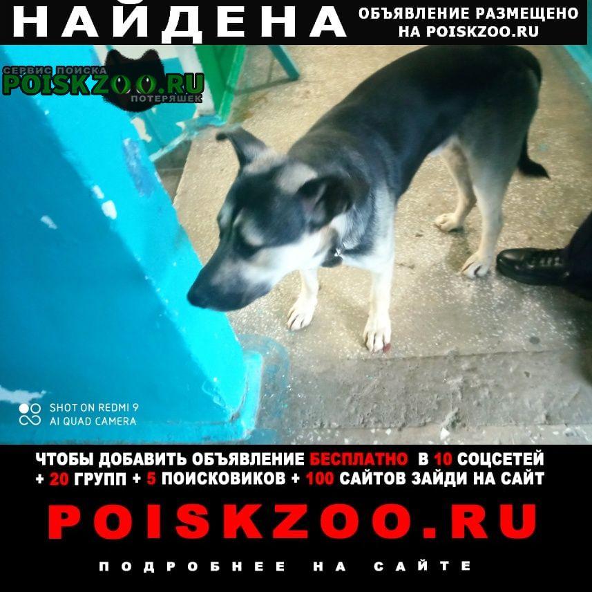 Найдена собака в районе белых рос. Красноярск