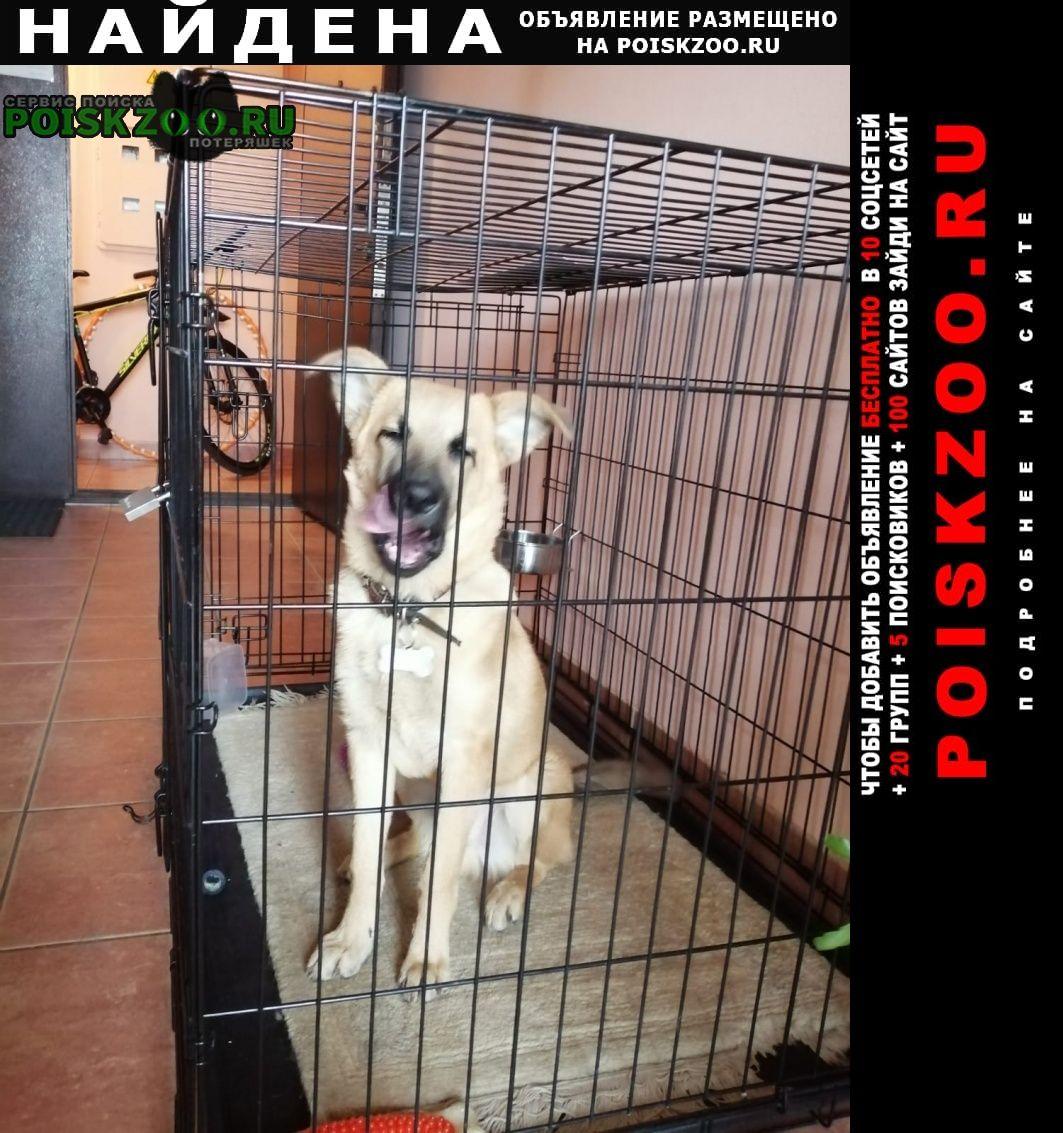 Найдена собака кобель щенок, 4 месяца Москва