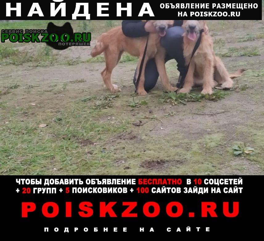 Найдена собака (две собаки) Орехово-Зуево