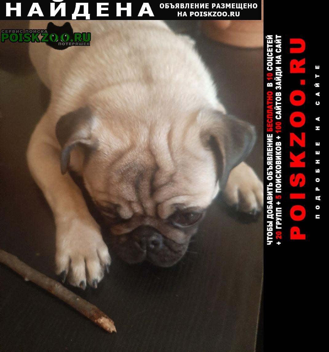 Найдена собака кобель мопс Симферополь