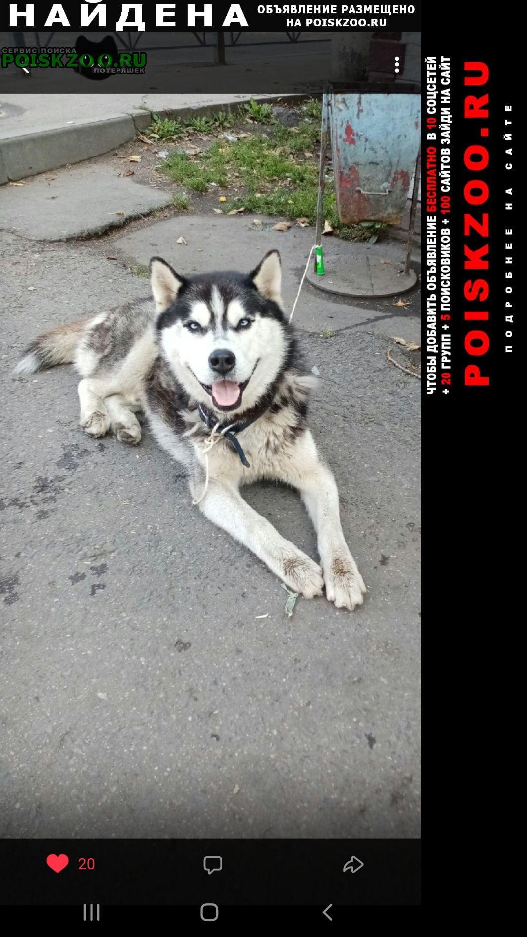 Найдена собака кобель хаски Люберцы