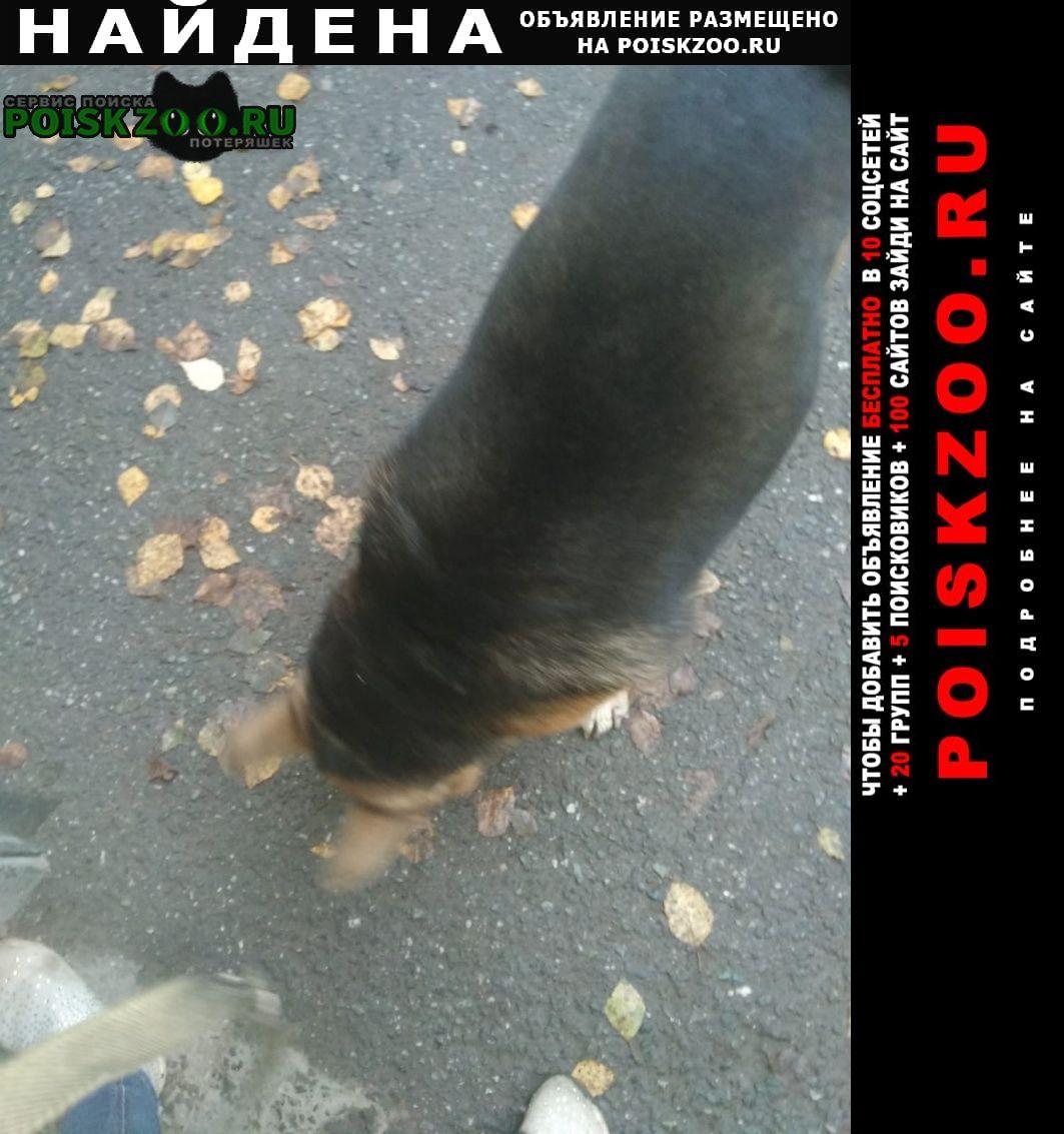 Найдена собака кобель Томск