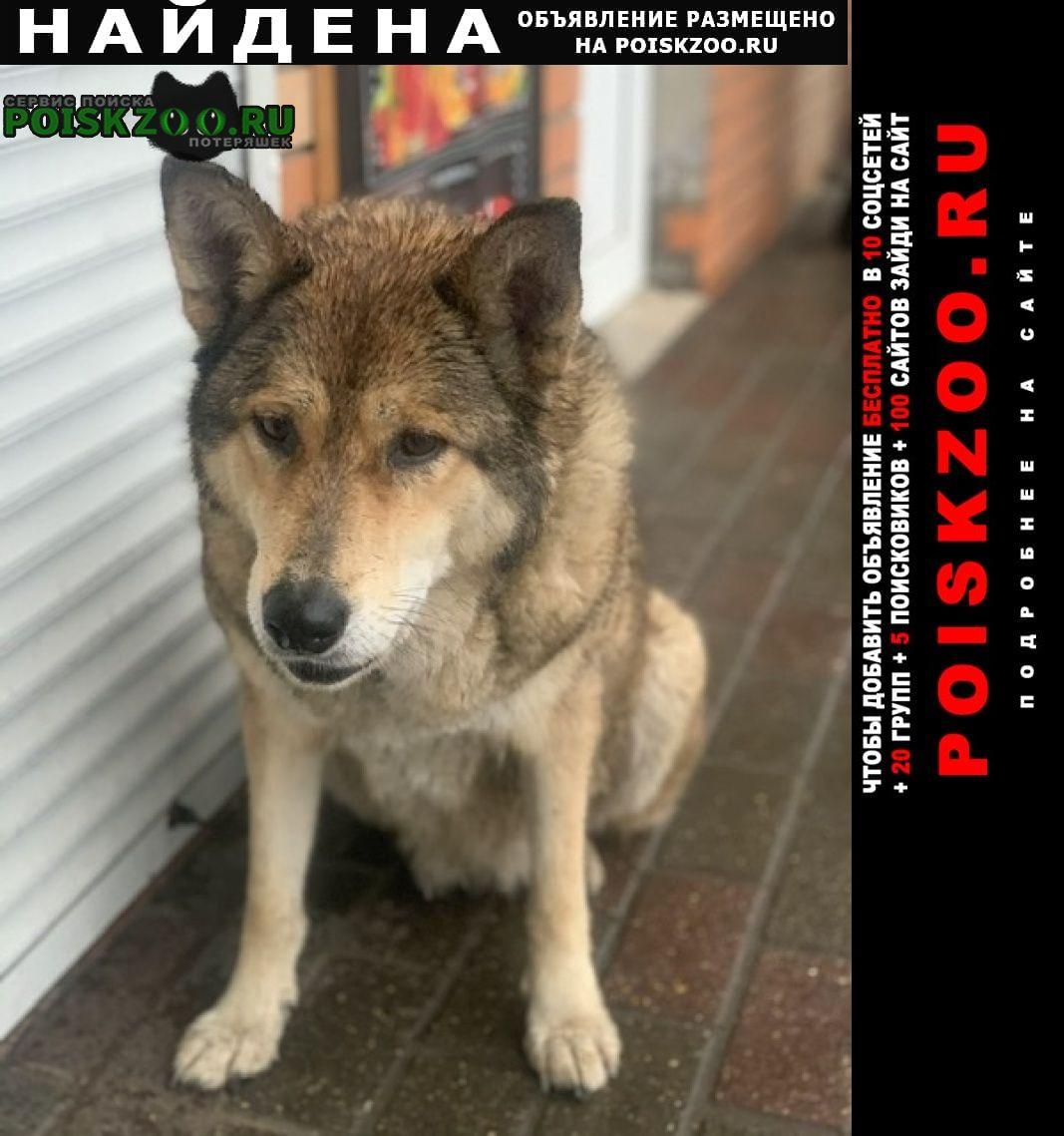 Найдена собака кобель в истре Истра