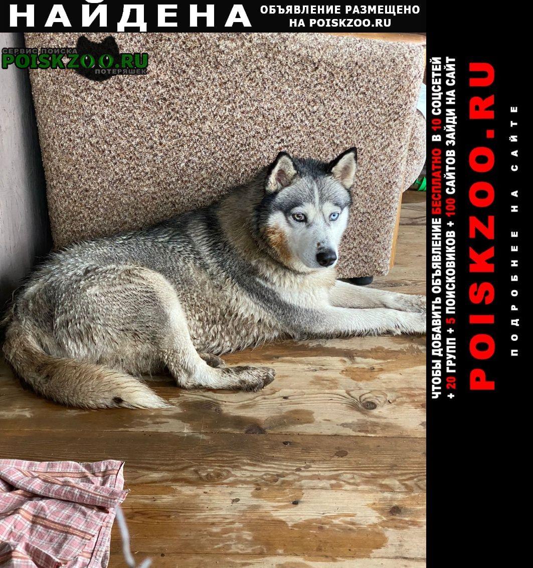 Найдена собака срочнооооо Мценск