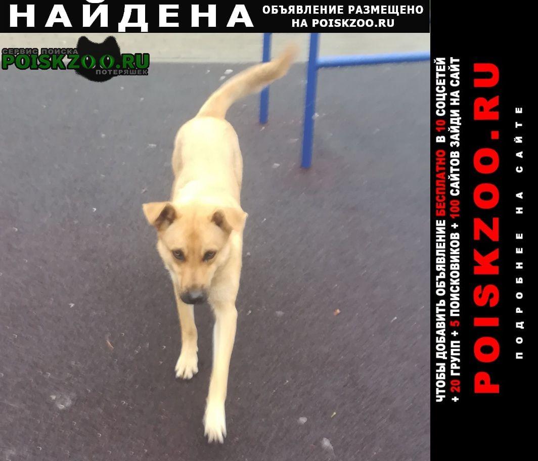 Найдена собака кобель город щёлково Щелково