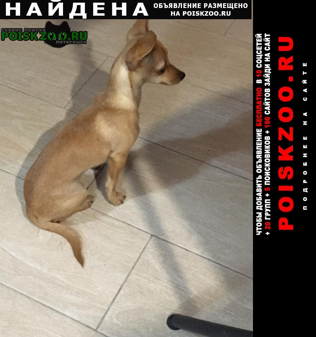 Найдена собака кобель той-терьер Сочи