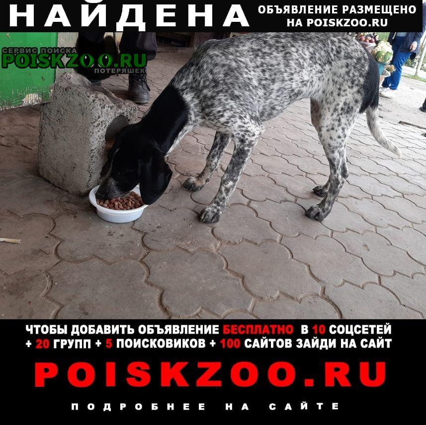Найдена собака охотничий спаниель Средняя Ахтуба