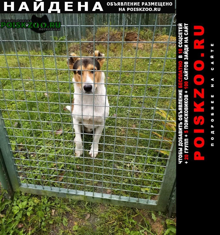 Найдена собака кобель снт строитель, прибилась собака Переславль-Залесский