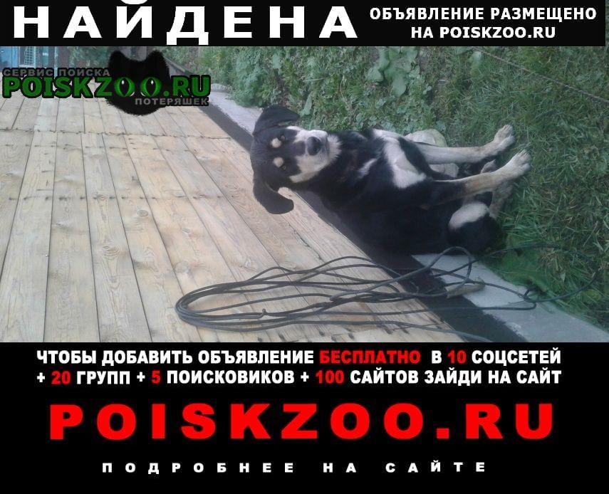 Найдена собака кобель Мошково