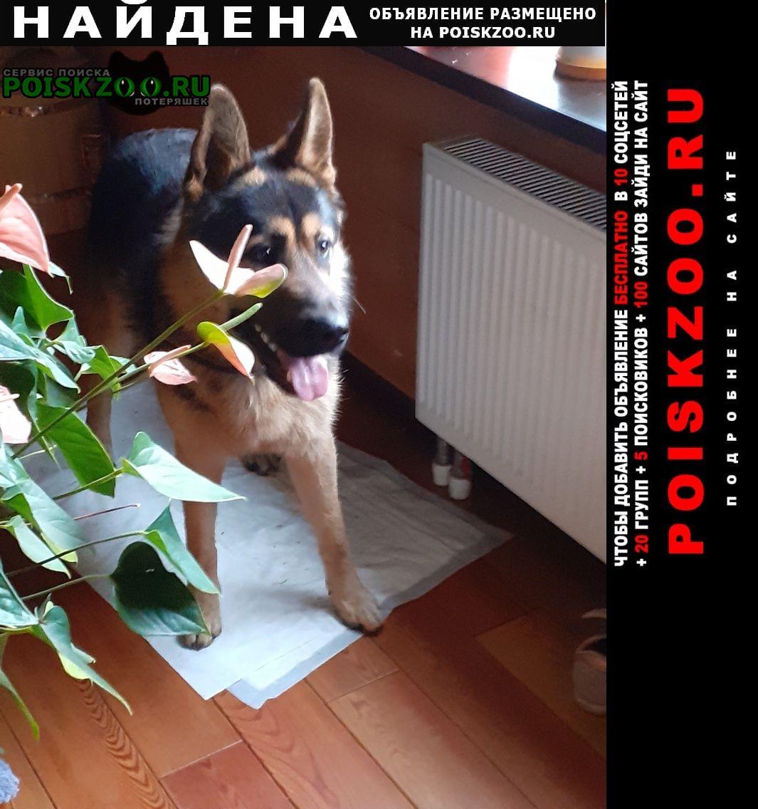 Найдена собака кобель в поселке усть-ижора Колпино